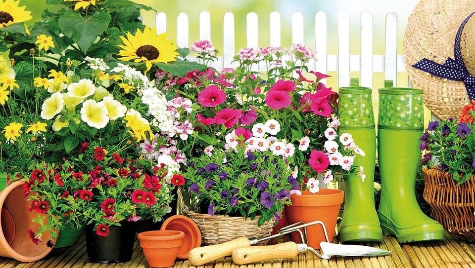 Concours Balcons et Maisons fleuris