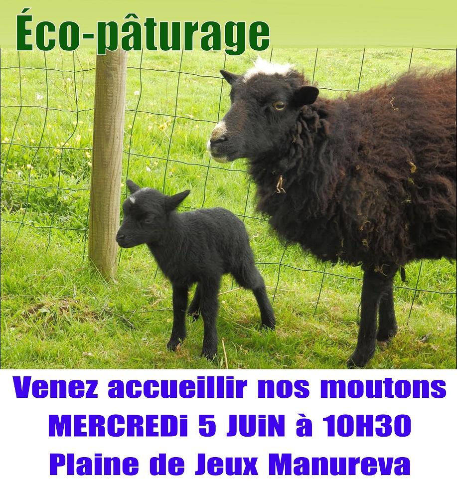 Venez accueillir nos moutons le mercredi 5 juin à 10h30 sur la plaine de jeux Manureva